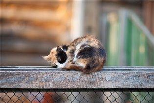 кошка спит - она устала
