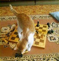 Юный гроссмейстер)
