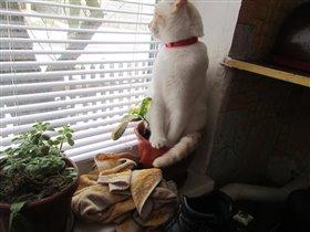 «Лучше кошки зверя нет!»
