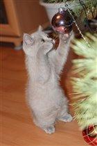 Новый год приходит к нам,когда котЭ бьет по шарам!