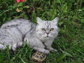 Кот Кэсик и черепаха Кристелла!