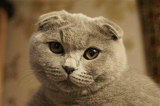 Кошечка 'Бусинка'