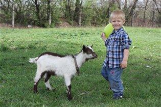 Идёт коза рогатая:)