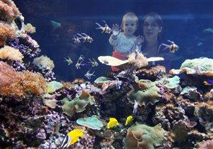 Созерцаем подводный мир.