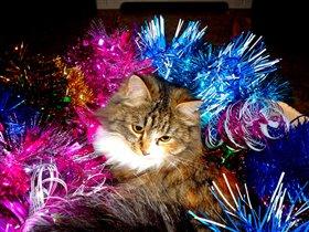 Год кота - каждый год