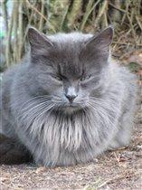 Дачная Кошка-Картошка.