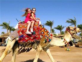 В пустыне путешествовать лучше на верблюде!!