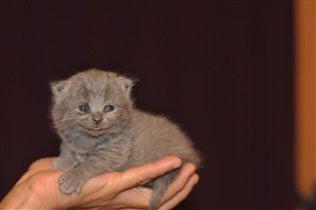 Чеширские коты улыбаются с рождения)))