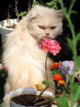 Вкушаю тонкий аромат цветов