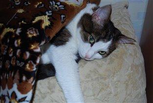 Наша кошка Соня: как положили- так и лежит