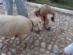 Овца гуляла по городу на поводке :)