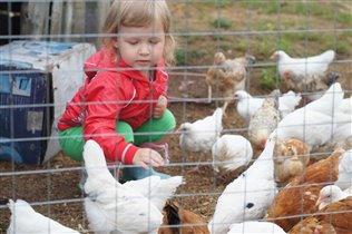 с цыплятками
