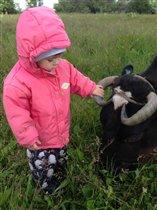 Майюшка кормит хлебушком корову 'Малышку'