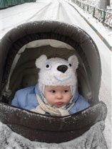 Белый медведь на северном полюсе.