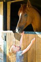 Лошадка, давай дружить!