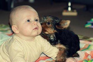 маленький дружок