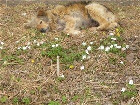 ты,весна,пока вставай,а ещё посплю ещё чуток..))