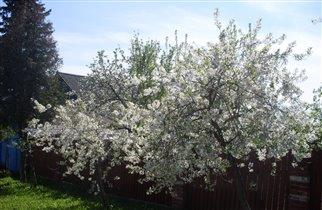 Весна в деревне