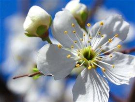 Один раз в год сады цветут!!!