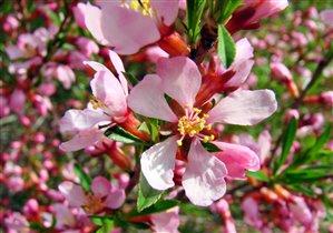 Один раз в год сады цветут...(с)