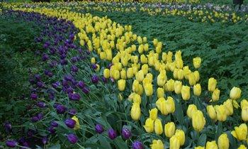Весна в Аптекарском огороде.