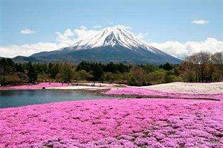 3 причины поехать в Японию весной, кроме сакуры