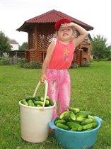 Настюша маме помогла, много огурцов нашла