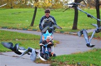 соревнования с голубями -так только папа может!