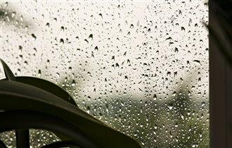 Дождик ласковый, тихий и тонкий