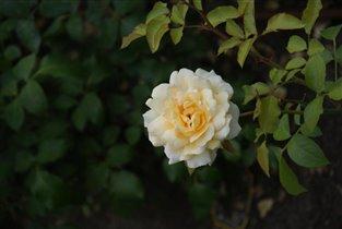 Жёстый цветок