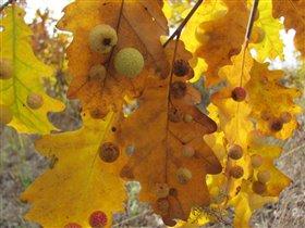 осень краса
