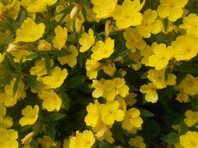 Есть в желтых цветах откровение жаркого лета!