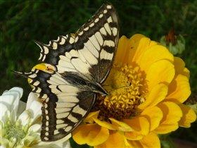 у желтого цветка самый вкусный нектар))