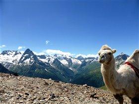 Высокогорный... верблюд! :)