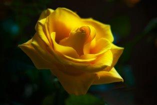 Желтое очарование