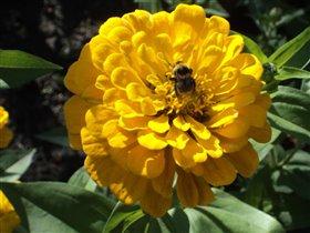 Желтые цветы- цвет солнца и пшеницы.