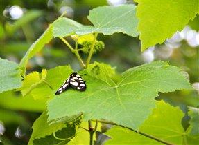 Красивое и незнакомое насекомое!