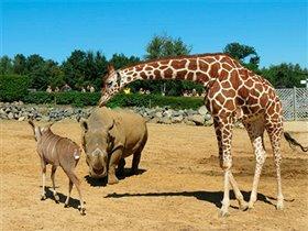 TripAdvisor назвал лучшие зоопарки и океанариумы мира