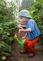 Вот какие помидоры я вырастил!