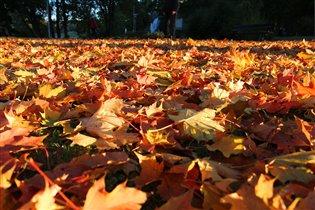 На ковре из желтых листьев