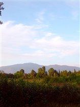 Абхазия, 'Сосновая роща'