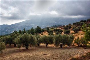 Оливковая роща перед грозой (г.Атавирос о. Родос)