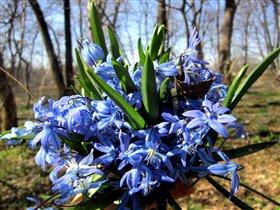 весна....