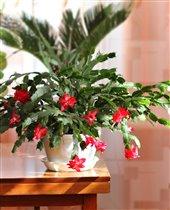 Наши красные цветочки!