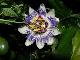 Посмотри на этот цветок и увидишь космос