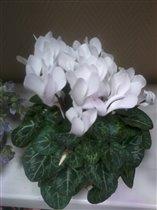 цветы прекрасные