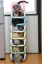 система хранения котов
