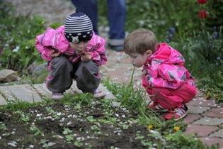 Помогаем сажать в огороде