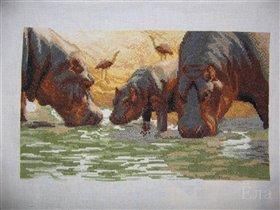Чаривна мить Бегемоты