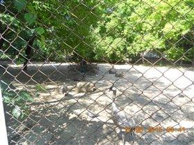 солнечный денек в зоопарке